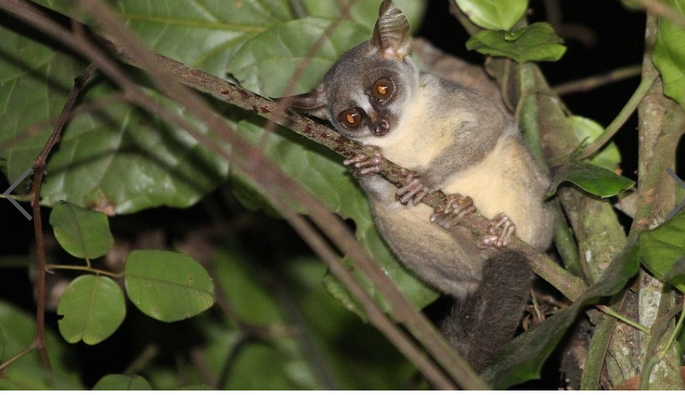 New+Primate+Discovered