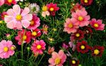 A beautiful set of flowers.