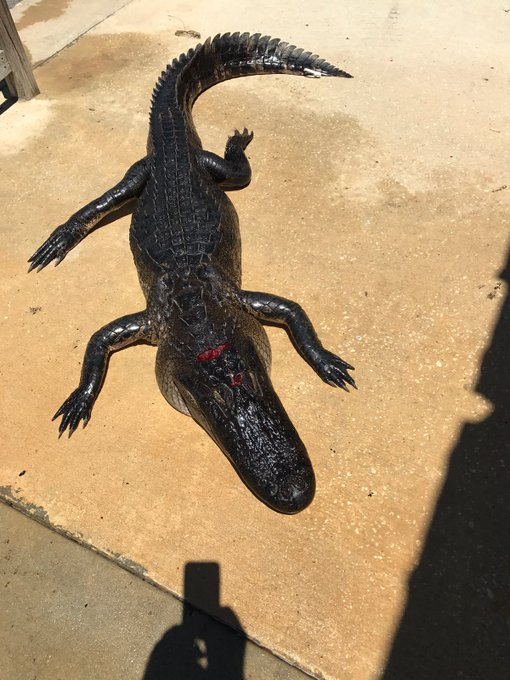 10-Year-Old+Fought+Off+Alligator