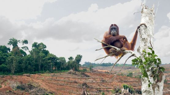 Palm Oil Problems