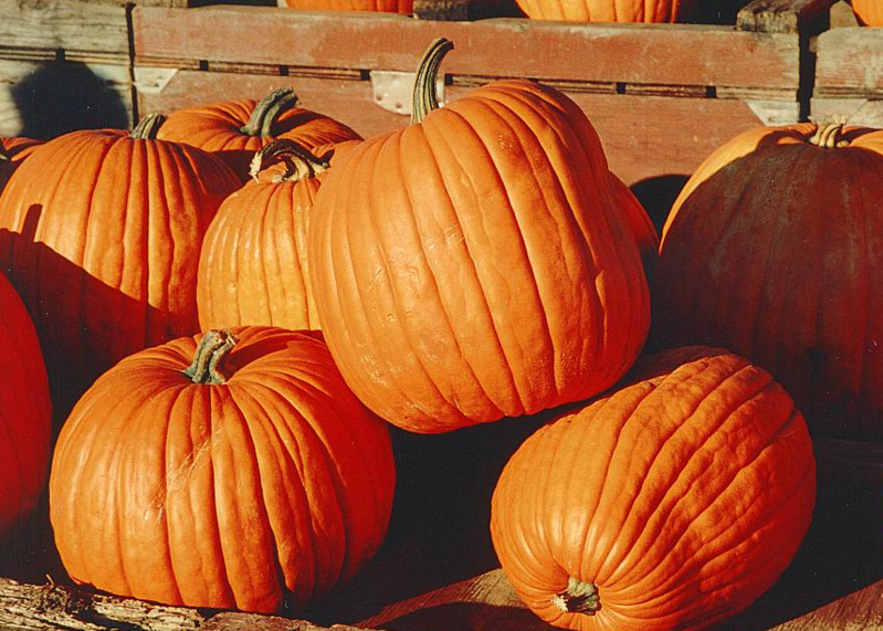 The+History+of+the+Pumpkin