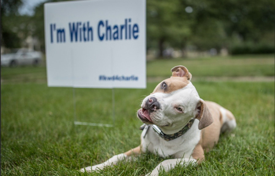 Pit Bull Ban Ends