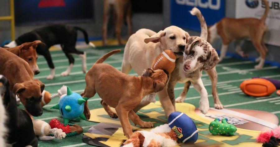 Puppy Bowl XIV