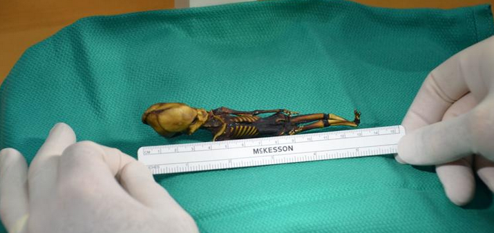 Ata+the+Chile+Alien+Skeleton+Reveals+Her+Secrets
