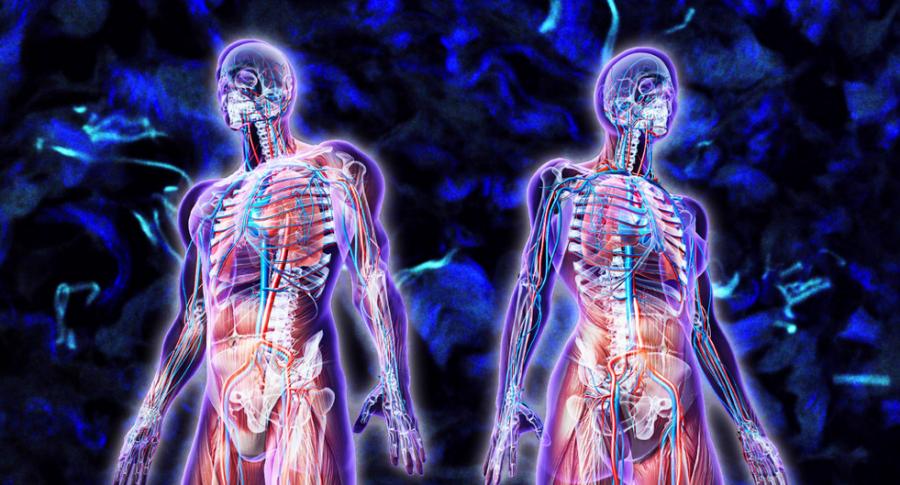 Meet+Your+%22Interstitium%2C%22+A+Newfound+Organ