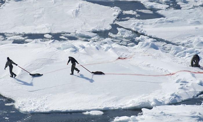 Canada's annual seal hunt