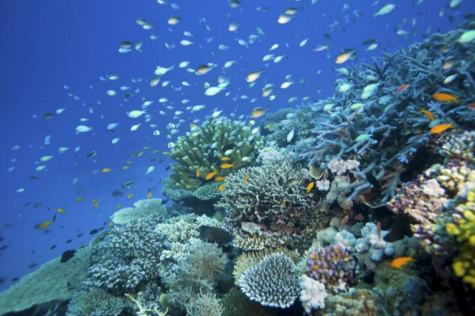 Australia Investing Millions to Save Great Barrier Reef