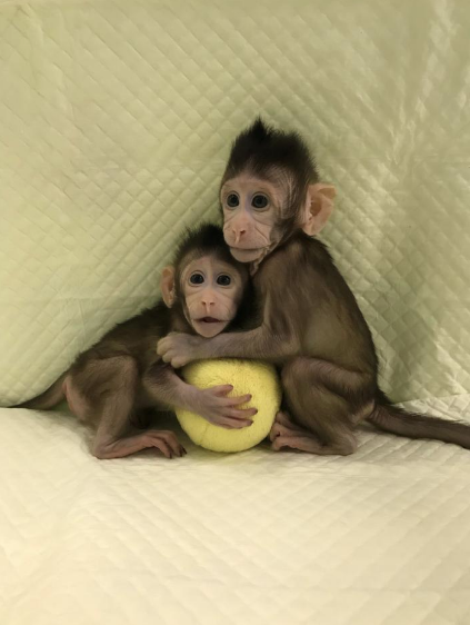 Chinese Scientists Break Barriers Leading to Cloning