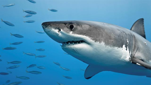 Can Shark DNA Help Cure Cancer?