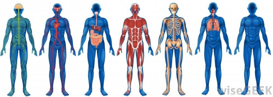 Anatomy+and+Physiology%27s+Cadaver+Field+Trip+at+BW