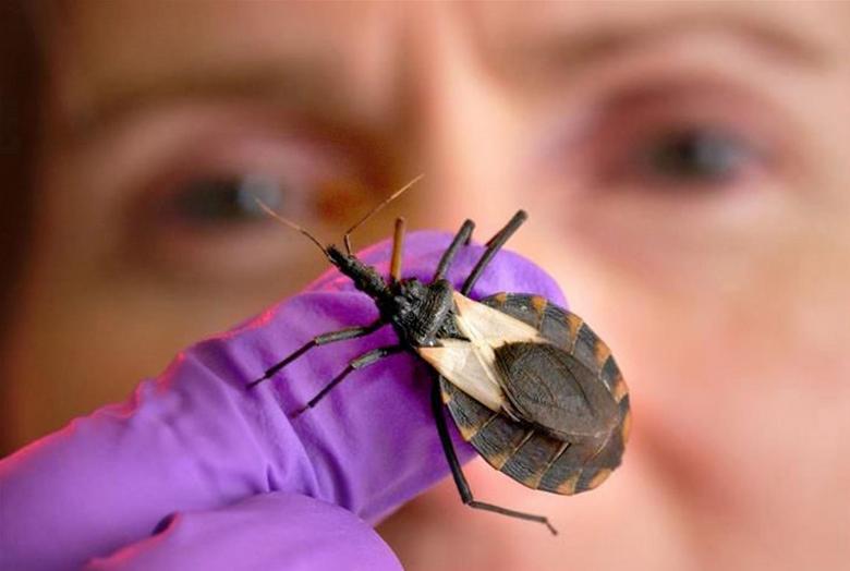 'Kissing Bug' Bites Child in Delaware