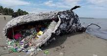 Pregnant Whale died with 50 pounds of plastic in her stomach