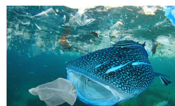 Plastic Taking Over the World