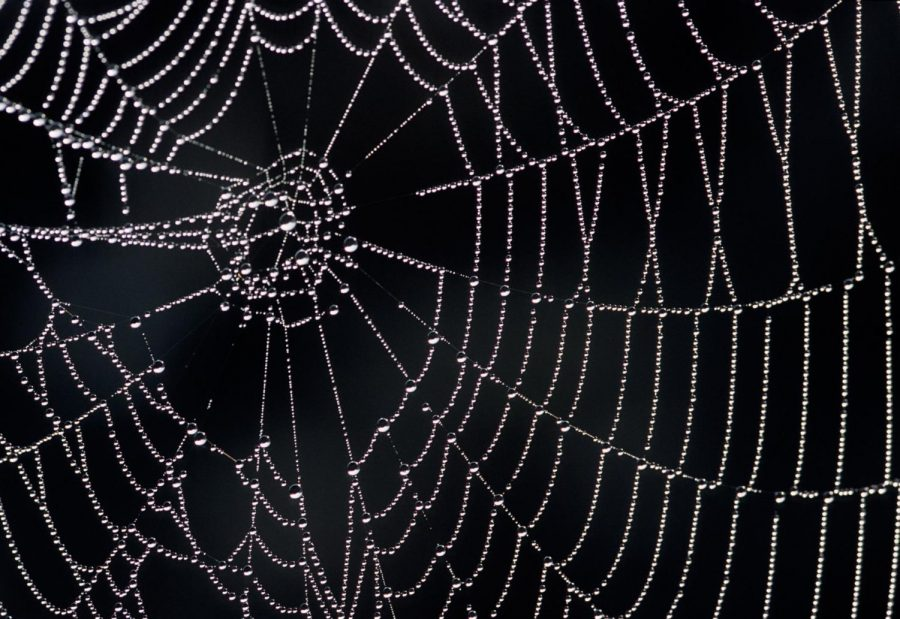 Scientists+Have+Discovered+a+Way+to+Talk+to+Spiders