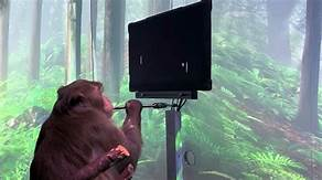 Using Elon Musk's Neuralink, Monkeys Can Play Pong With Their Minds