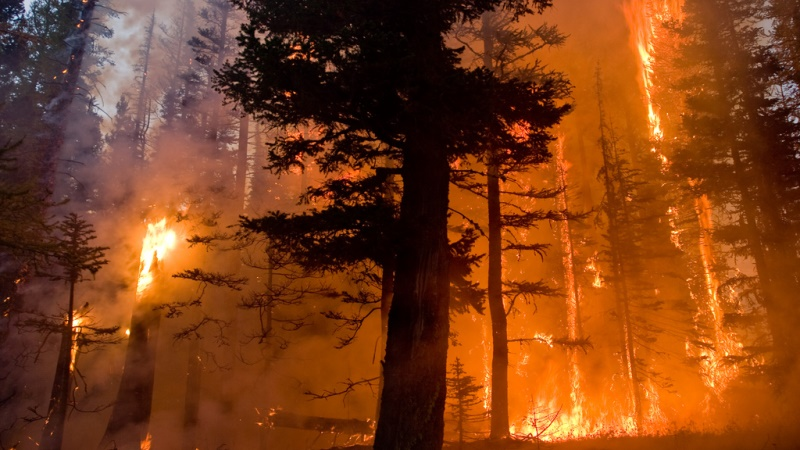 What is Fire Ecology